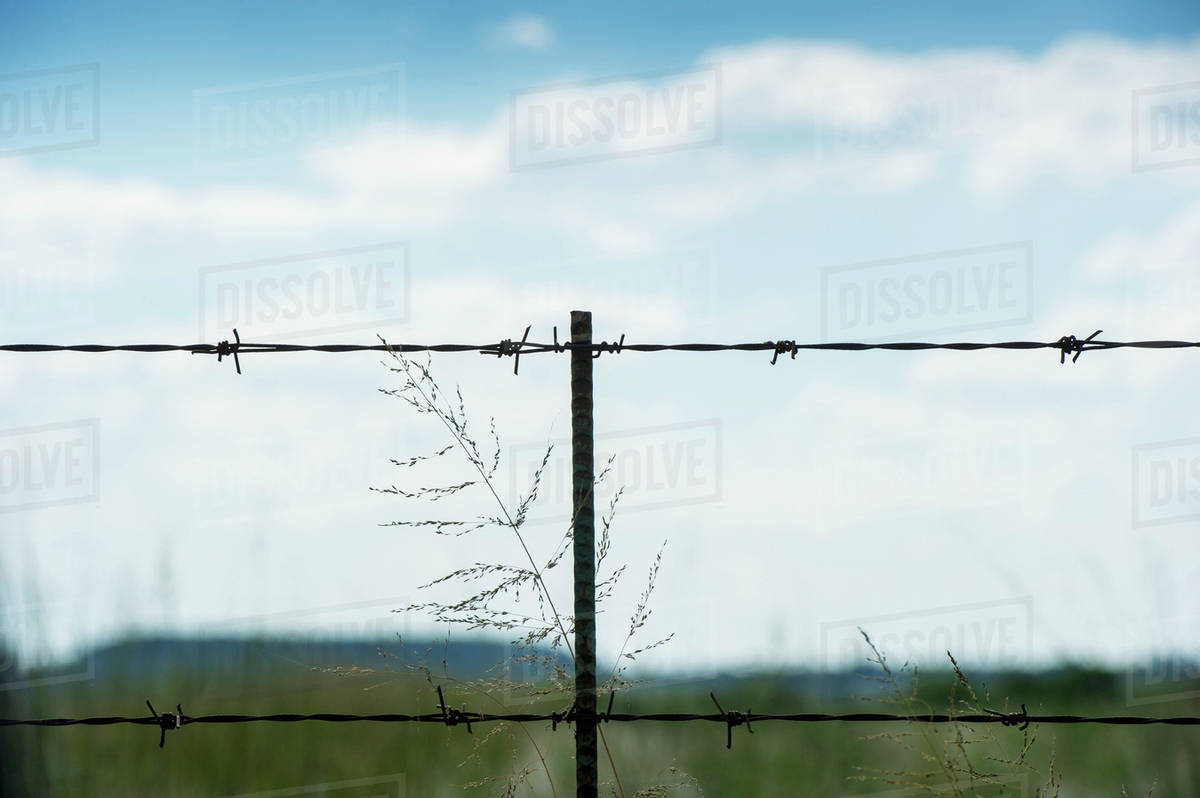 Grass growing up barbed wire fence on farm; Cullinan, Gautang, South ...