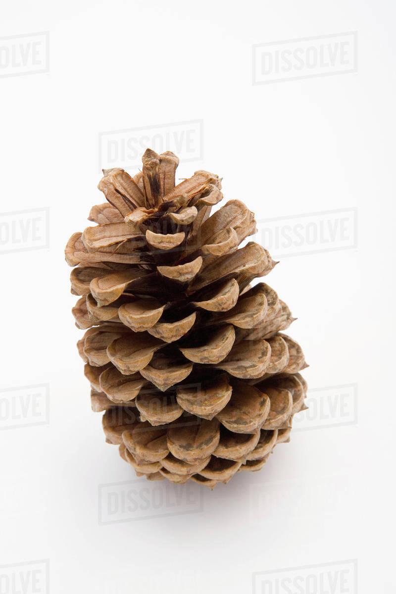 closeup of large pine cone christmas decoration on white background studio portrait - Decorating Large Pine Cones For Christmas