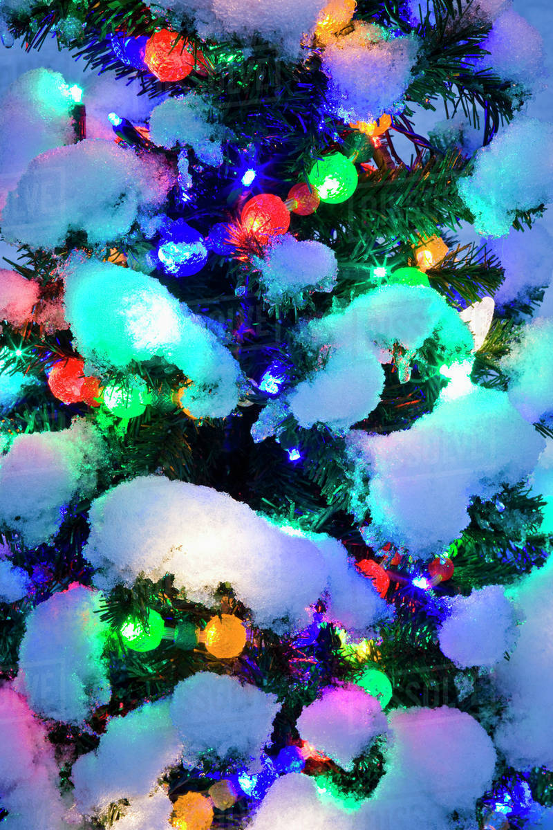 quality design 48644 65069 Close Up Of A Multi-Colored Christmas Tree Lit At Dusk Outside In Winter  stock photo