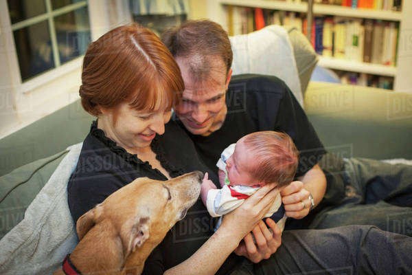 A mother and father hold a newborn baby and introduce him to the family dog;Willimantic, connecticut, united states of america Royalty-free stock photo