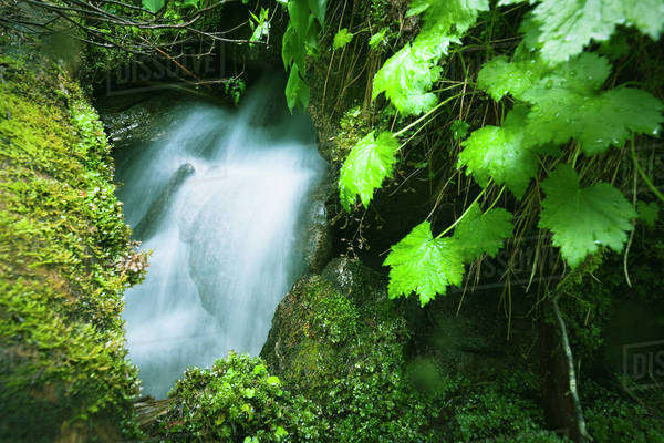 A small waterfall appears and disappears again on a mossy slope;British columbia, canada Royalty-free stock photo