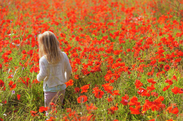 Young girl walking through poppy field near fulbourn;Cambridgeshire england Royalty-free stock photo