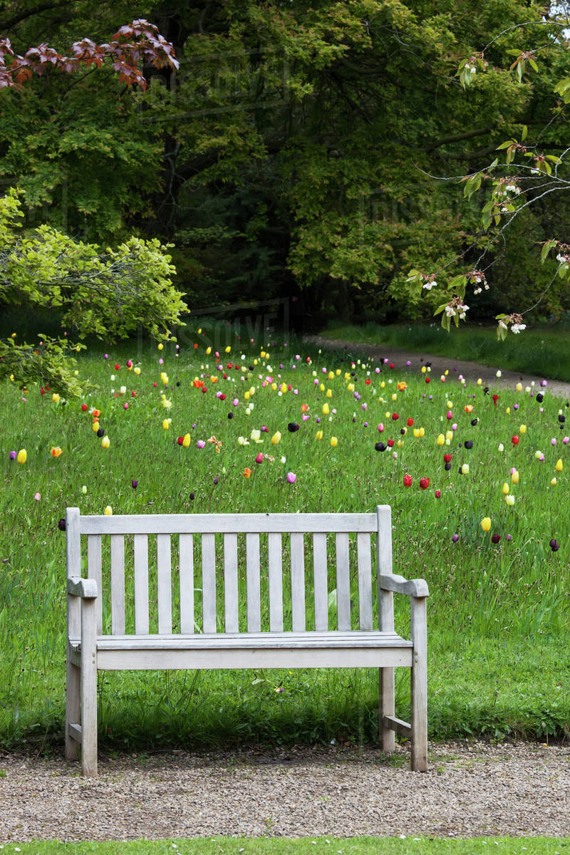 Fabulous A Wooden Bench With Tulips Blossoming In A Fieldnorthumberland England D869 37 685 Pdpeps Interior Chair Design Pdpepsorg
