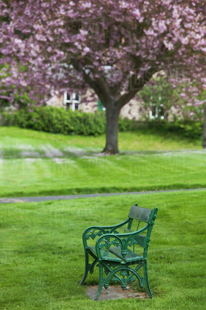 A Green Metal Bench In A Park With A Blossoming Tree Ford Village