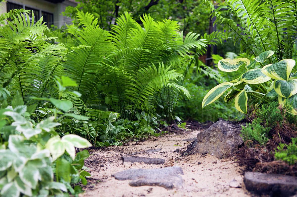 Home Garden With Ferns On A Pathway; Winnipeg Manitoba Canada