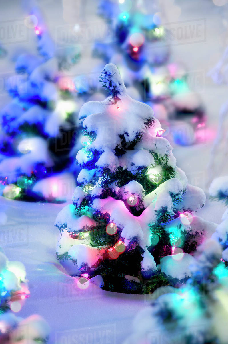 Small Christmas Trees With Colourful Lights And Covered With Snow Edmonton Alberta Canada Stock Photo