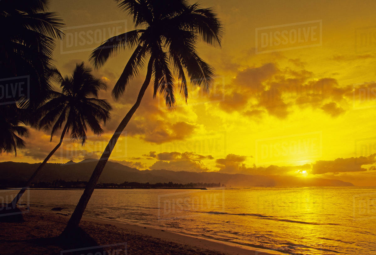 palm trees on sandy beach silhouetted by bright yellow sunset sky