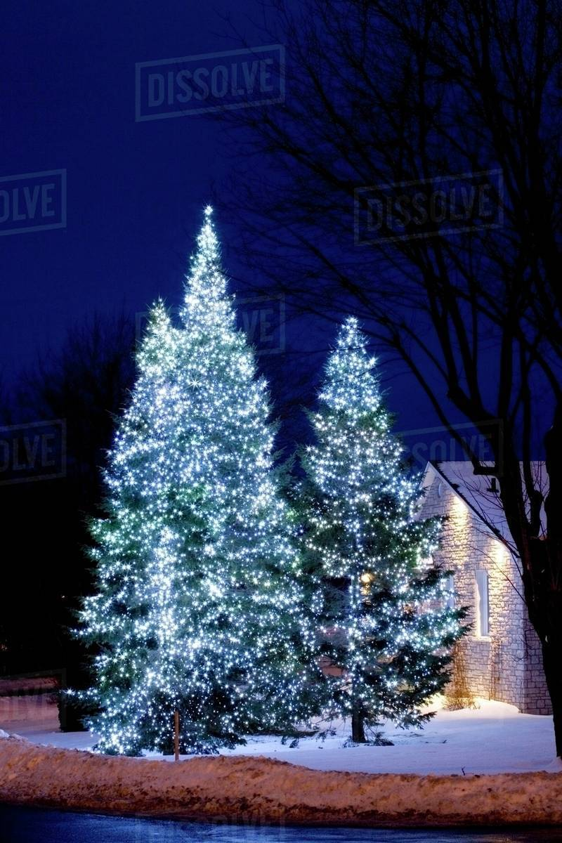 Christmas Lights On Trees Outside