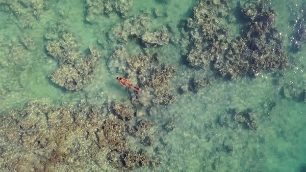 Aerial shot of woman snorkeling, exploring tropical reef and swimming in blue lagoon in crystal clear ocean. Royalty-free stock video