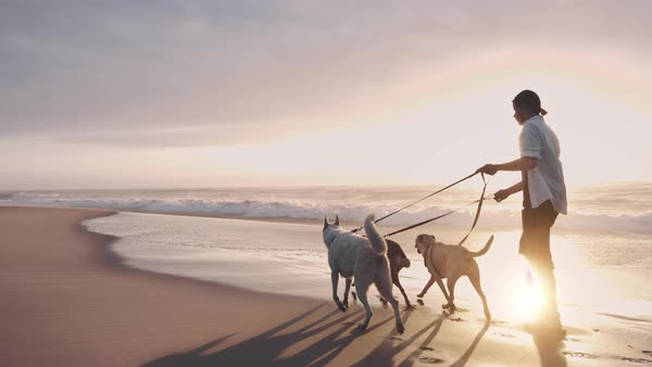 Man walking with dogs on beach Royalty-free stock video