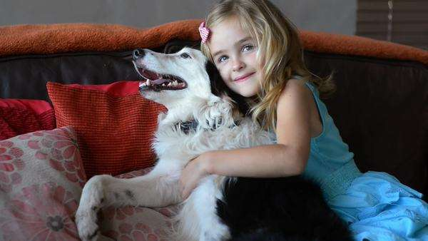 Young girl, sitting on couch having fun playing and petting family pet border collie dog Royalty-free stock video