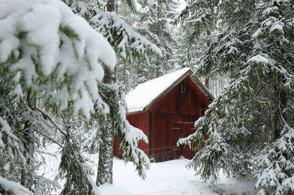 Snow covered hut and trees in winter Royalty-free stock photo