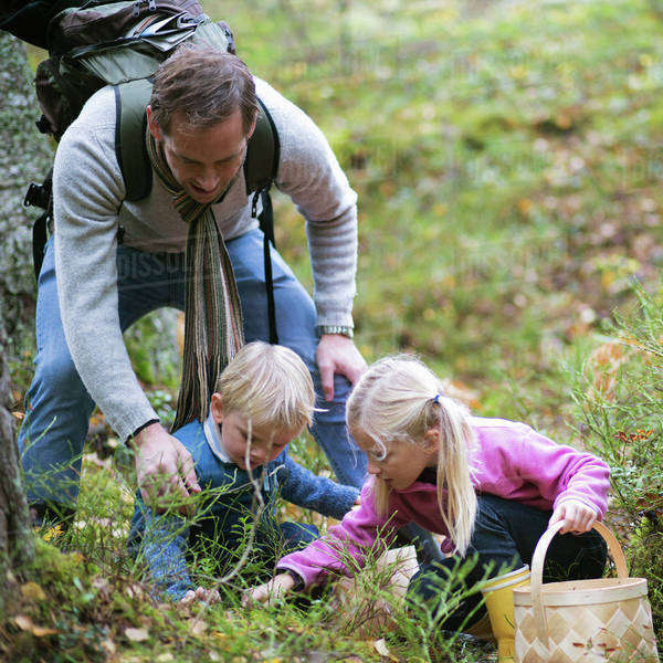Father with children picking mushrooms in field Royalty-free stock photo