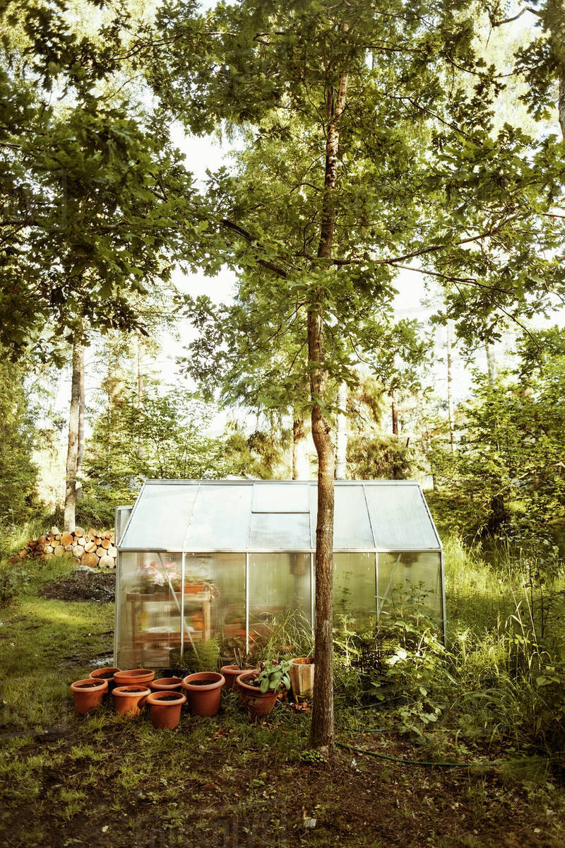 Marvelous Potted Plants Outside Small Greenhouse On Farm Stock Photo Interior Design Ideas Philsoteloinfo