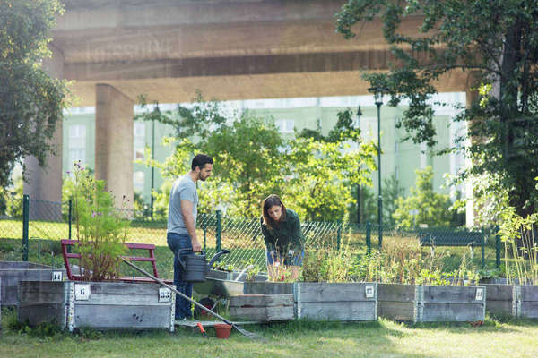 Mid adult couple working in community garden Royalty-free stock photo