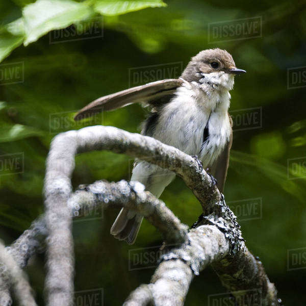 Small bird on branch Royalty-free stock photo