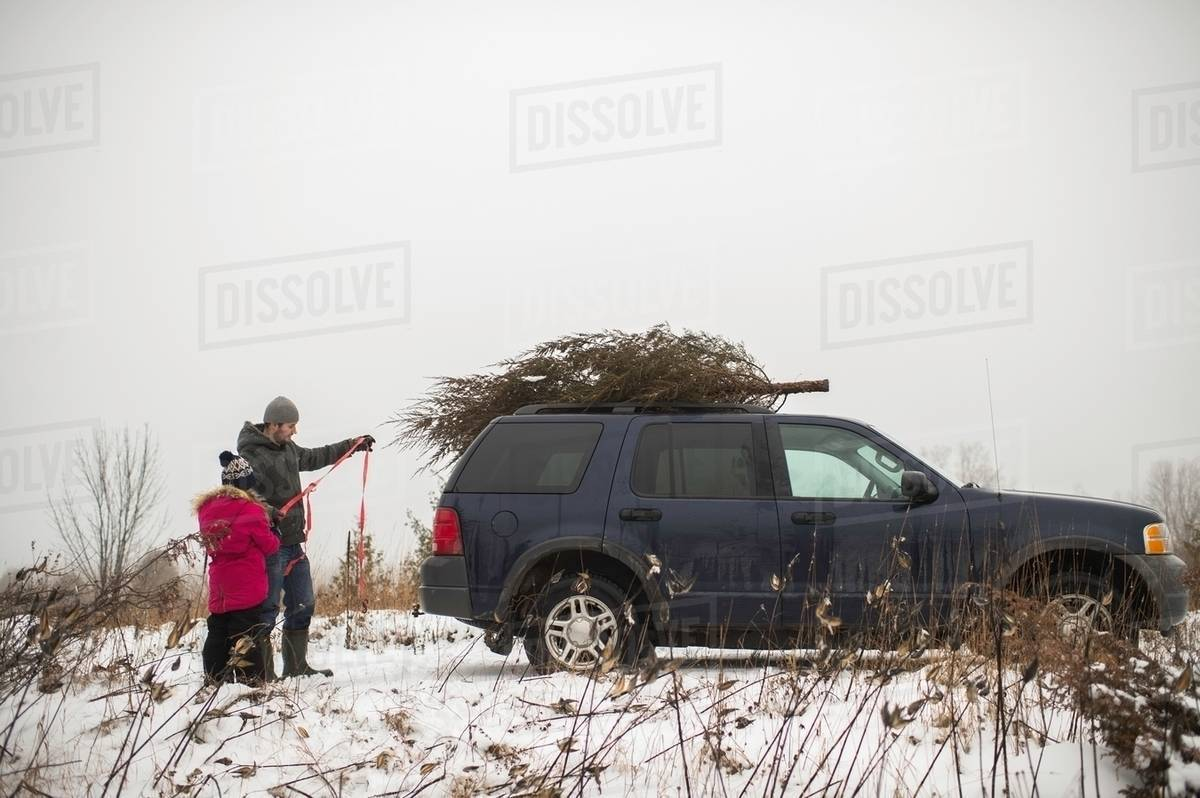 Car Christmas Tree.Father And Daughter Tying Christmas Tree On Roof Of Car Stock Photo