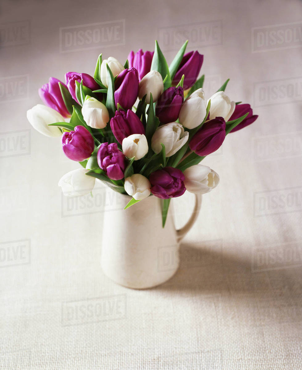 White And Purple Tulip Flower Arrangement In Jug Stock Photo
