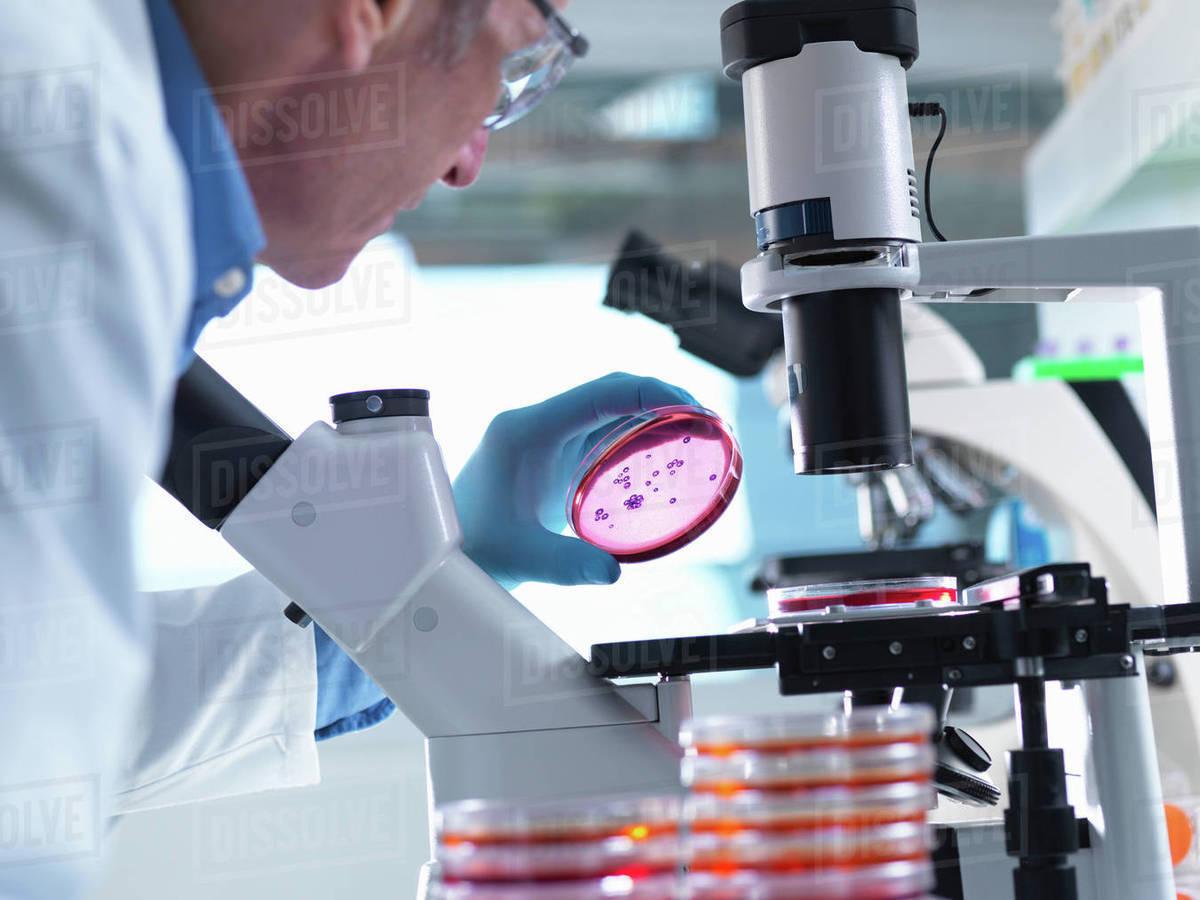 Light microscopes microbiology study