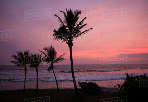 Beach and palm trees at sunset, Galle, Sri Lanka Royalty-free stock photo