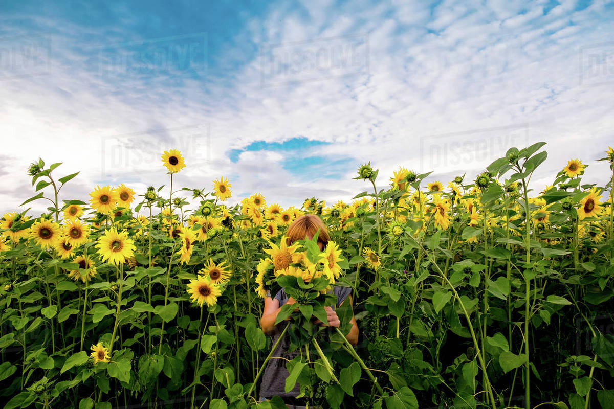 Woman Standing In Field Of Sunflowers Holding Flowers In Front Of