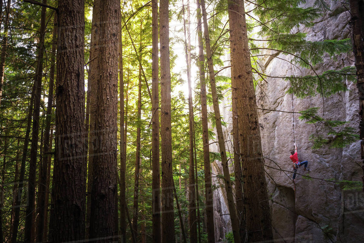 Rock climber scaling rock face close to trees, Squamish, Canada Royalty-free stock photo