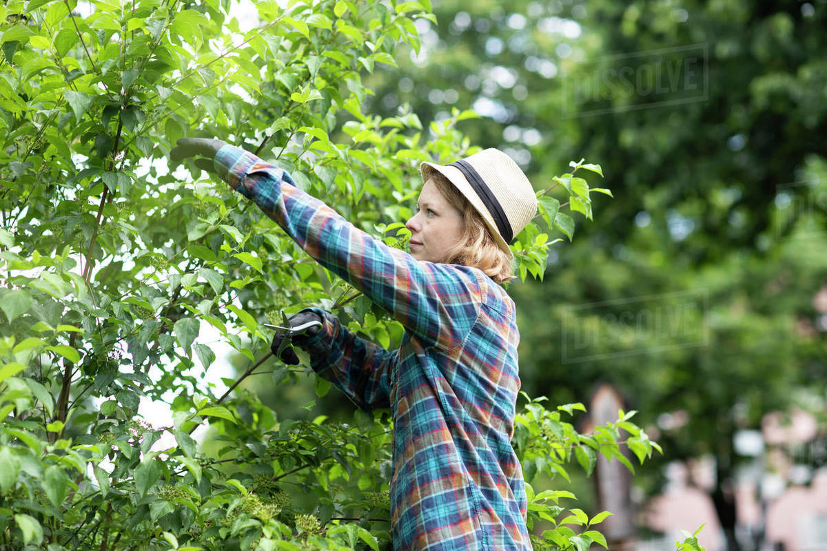 Mid adult woman pruning tree in her garden, side view Royalty-free stock photo