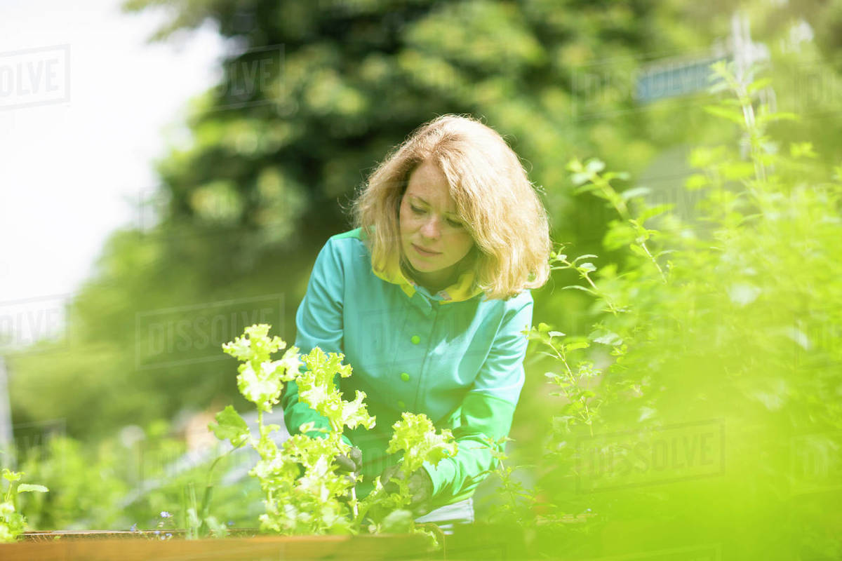 Mid adult woman tending plants in her garden Royalty-free stock photo