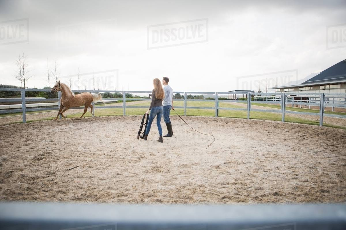 Two Stablehands Training Palomino Horse In Paddock Ring Stock Photo Dissolve