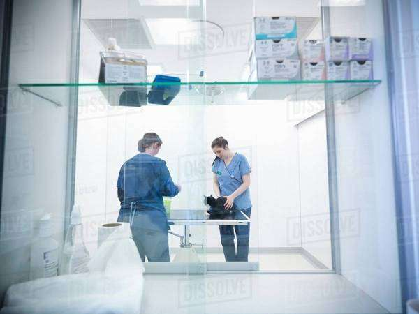 Veterinary nurses examining cat on table in veterinary practice.  View through glass shelving unit with medication Royalty-free stock photo