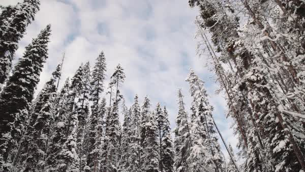 Wide-angle shot of a snowy forest Royalty-free stock video