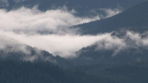 timelapse of clouds rolling in and over thick, dense forest in the Pacific Northwest mountain range. Royalty-free stock video