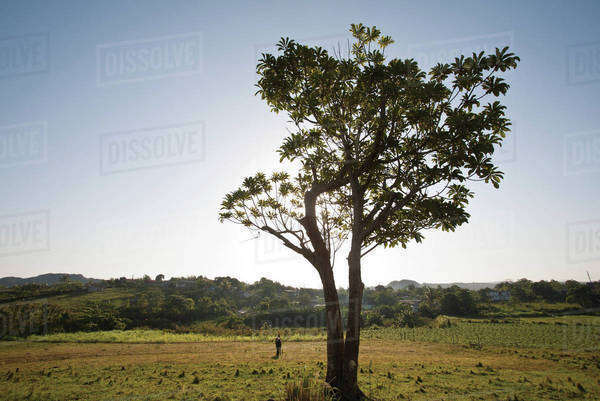 Tree in rural pasture Royalty-free stock photo