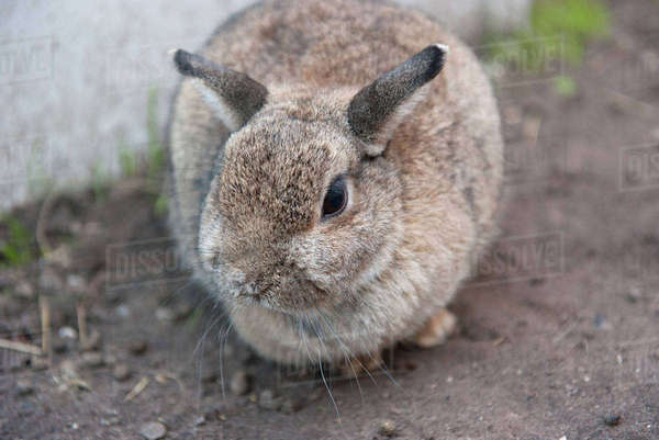 Rabbit, close-up Royalty-free stock photo