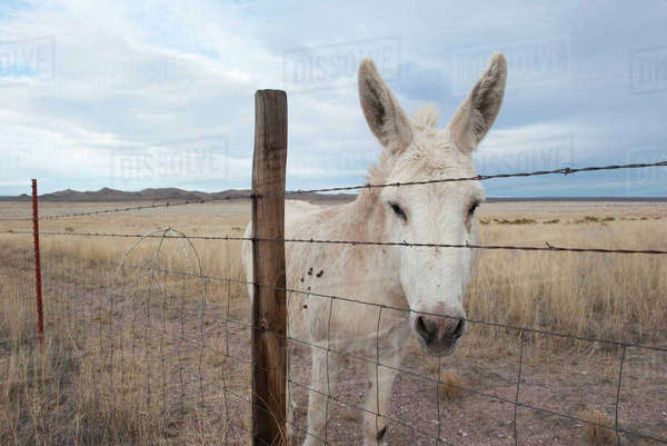 White donkey in pasture Royalty-free stock photo