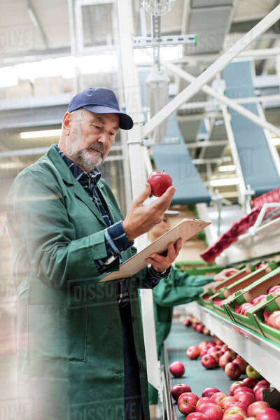 Manager with clipboard inspecting red apples in food processing plant Royalty-free stock photo