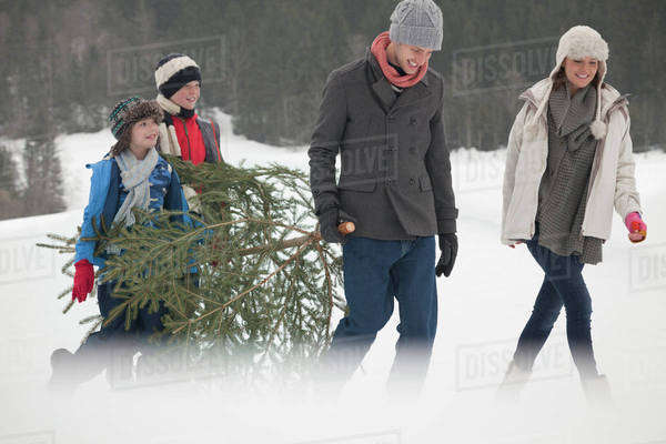 Happy family carrying fresh Christmas tree in snowy field Royalty-free stock photo