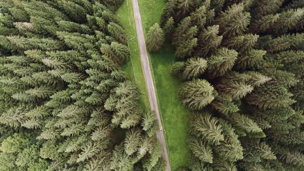 Wide shot of a pine forest during daytime Royalty-free stock video