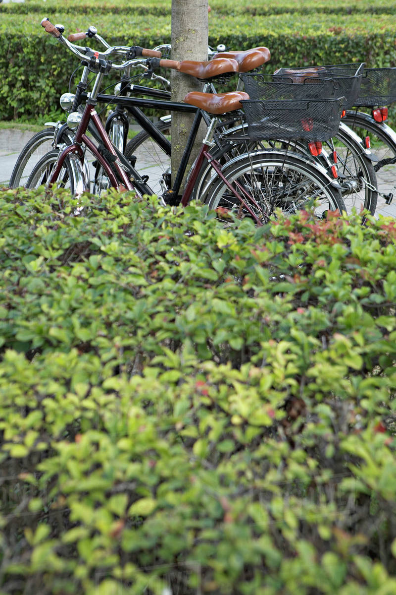 Four bicycles leaning side by side on a tree - Stock Photo - Dissolve