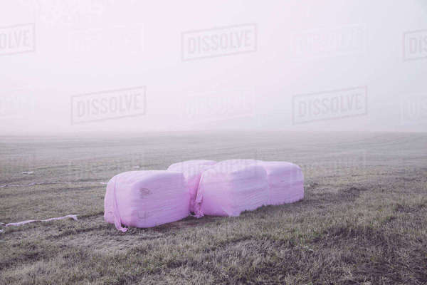 Wrapped hay bales in field on foggy day Royalty-free stock photo