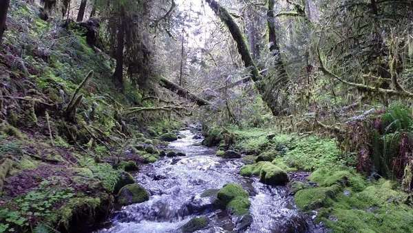 Stream flowing in deciduous forest Royalty-free stock video