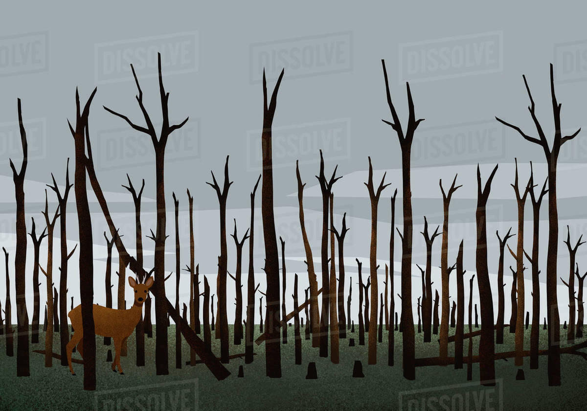 Deer standing among burned trees in woods after forest fire Royalty-free stock photo