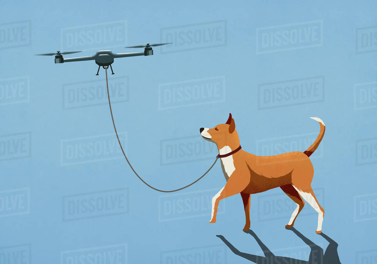 Drone taking dog for walk on leash Royalty-free stock photo