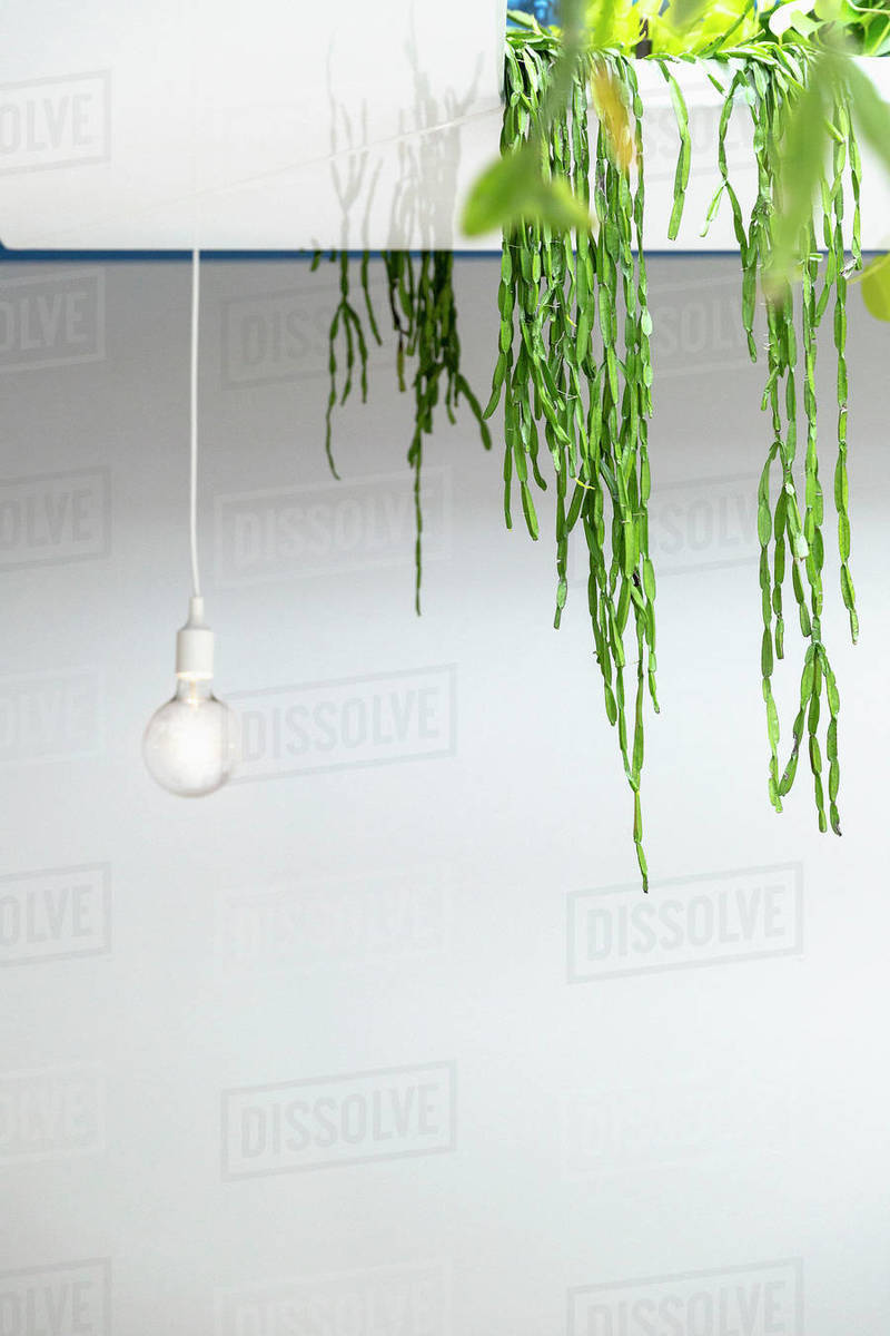 Hanging plant and light bulb Royalty-free stock photo